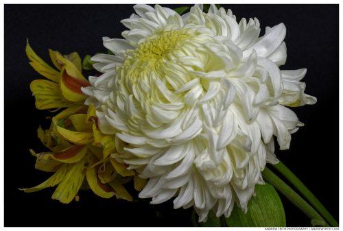 flower_black1