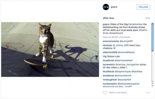 GoPro-cat